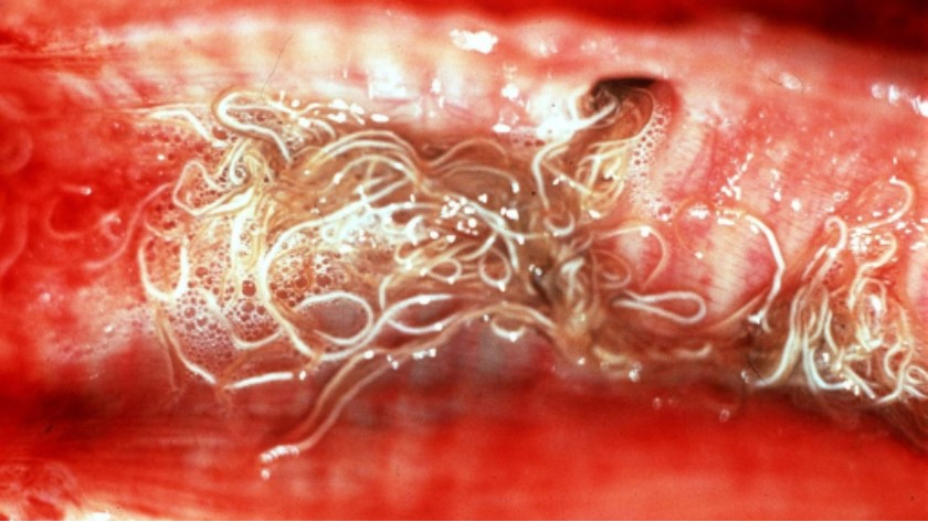 Look out for Lungworm!